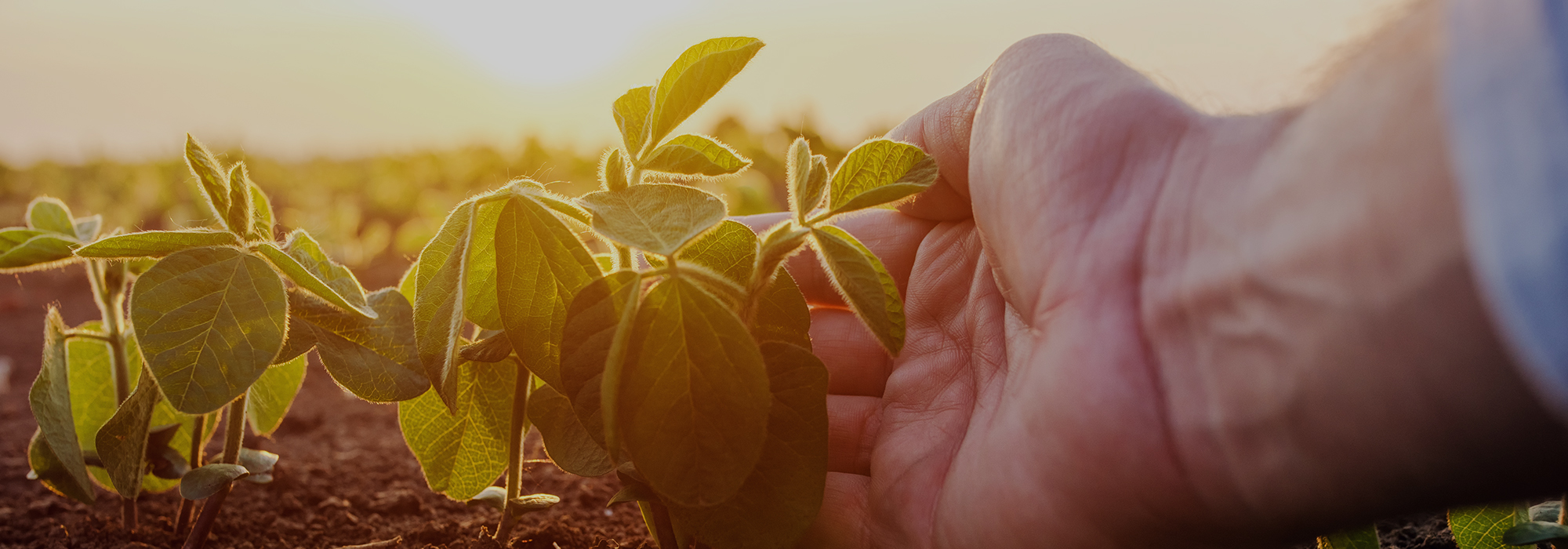 GMOs: Good, Bad, Ugly?